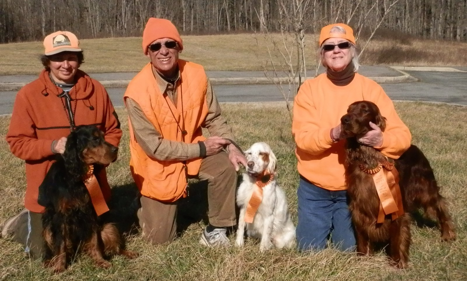 Comparsion of the Four Setters | Sand Hills Pointing Breeds Club